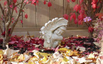 Gli Angeli sono il Ponte che ci aiuta a creare il Paradiso in Terra